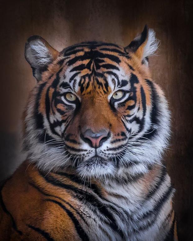 Фото №3 - Фотограф часами выжидал животных ради серии снимков, на которых они смотрят тебе прямо в глаза