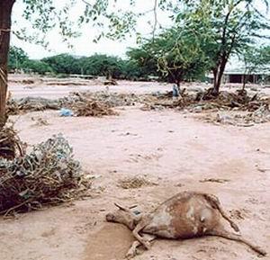 Фото №1 - Десятки человек погибли от наводнений в восточной Африке