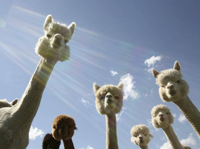 Фото №10 - Самые ми-ми-милые дикие животные