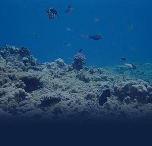Фото №1 - Морское дно оползло