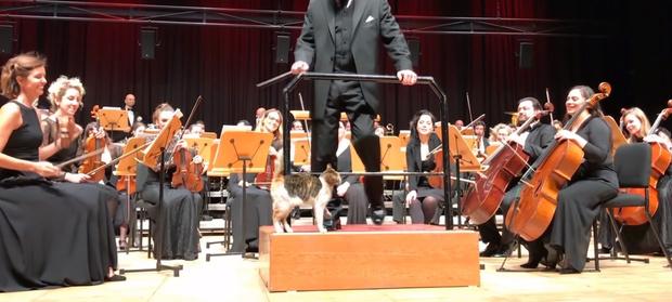 Фото №1 - В Стамбуле кошка вышла на сцену во время концерта и стала гвоздем программы (видео)