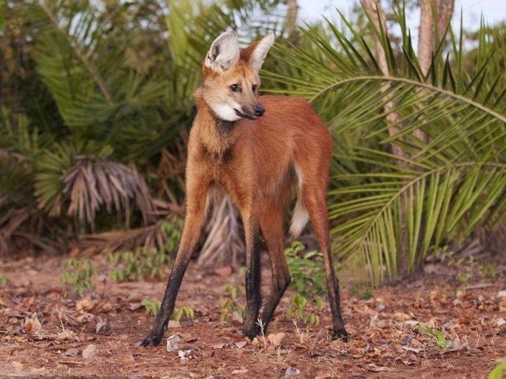 Фото №9 - Только посмотрите на них! 10 самых уродливых животных на Земле