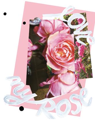 Фото №9 - Розы из сада д'Орнано: аромат Izia от Sisley