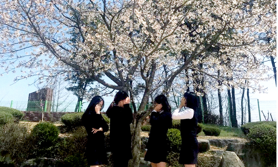 Обучение в Корее – программы и стоимость