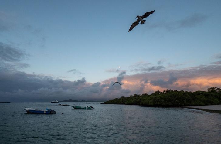 Фото №1 - У Галапагосских островов обнаружены новые виды животных