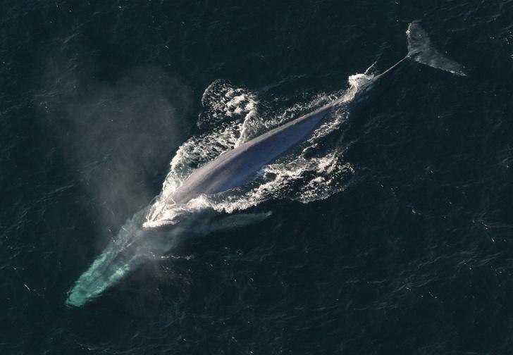 Фото №10 - Чудо-юдо рыба-кит