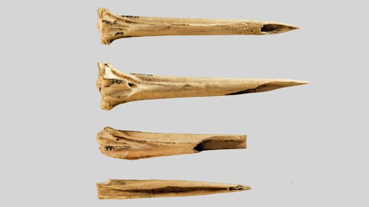 Фото №1 - В США нашли самые древние в мире инструменты для нанесения татуировок