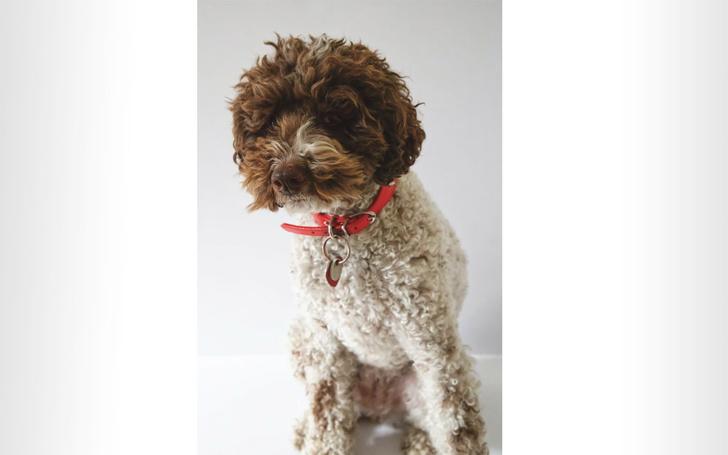 Фото №3 - 9 странных дизайнерских пород собак