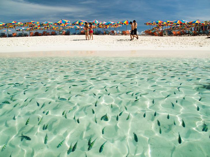 Фото №1 - Таиланд закрывает для туристов три острова