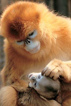Фото №2 - Горы золотой обезьяны