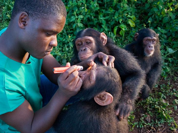 Фото №1 - Болеют ли обезьяны СПИДом?
