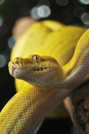 Фото №3 - К чему снятся змеи: что говорят сонники и психологи