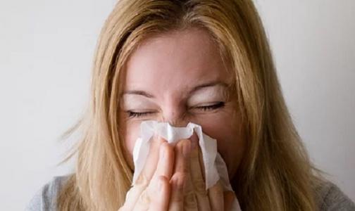Фото №1 - Когда чихать на всё хотел: мифы и правда о чихании