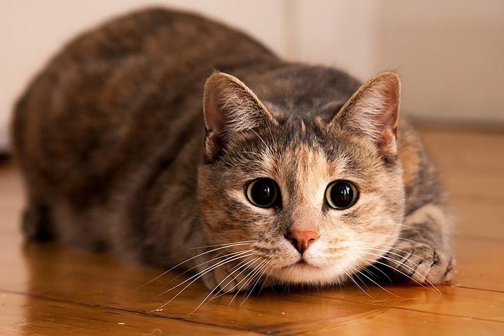 Фото №1 - Просмотр видео про кошек обладает терапевтическим эффектом