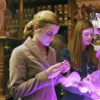 Фото №9 - 10 потрясающих магазинов Косого Переулка, которые не показали в «Гарри Поттере»