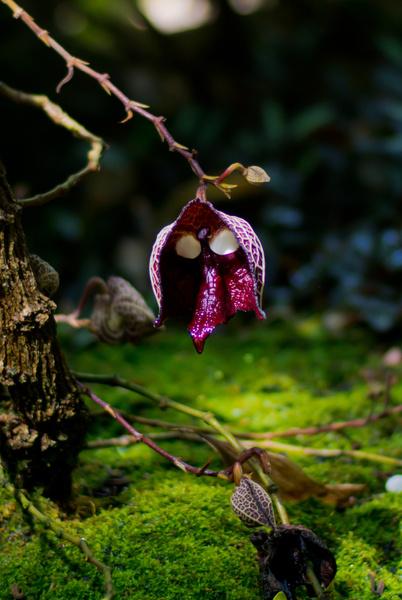Фото №4 - 22 растения, которые выглядят пришельцами с другой планеты