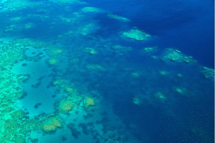 Фото №1 - Большой Барьерный риф потерял половину своих кораллов