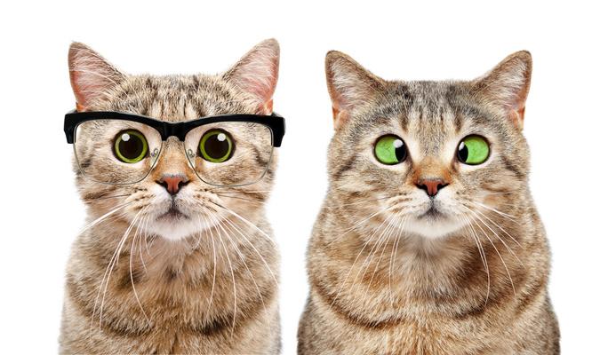 Фото №2 - Как измерить IQ кота? (Исследование и тест)