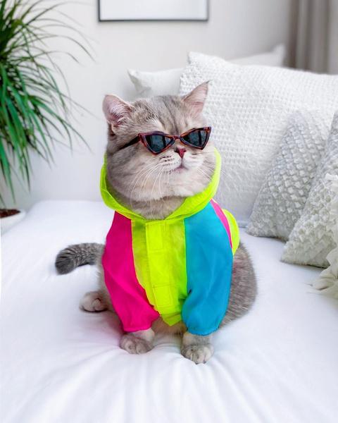 Фото №18 - Инста дня: Этот кот про моду знает больше, чем ты 😂