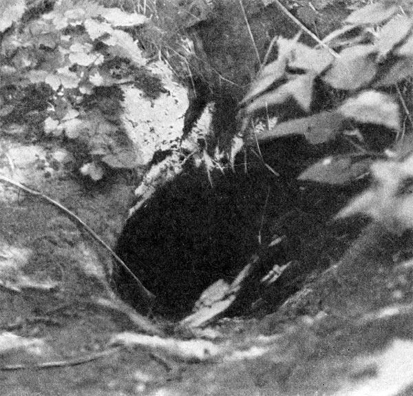 Фото №5 - Курский  черноземный