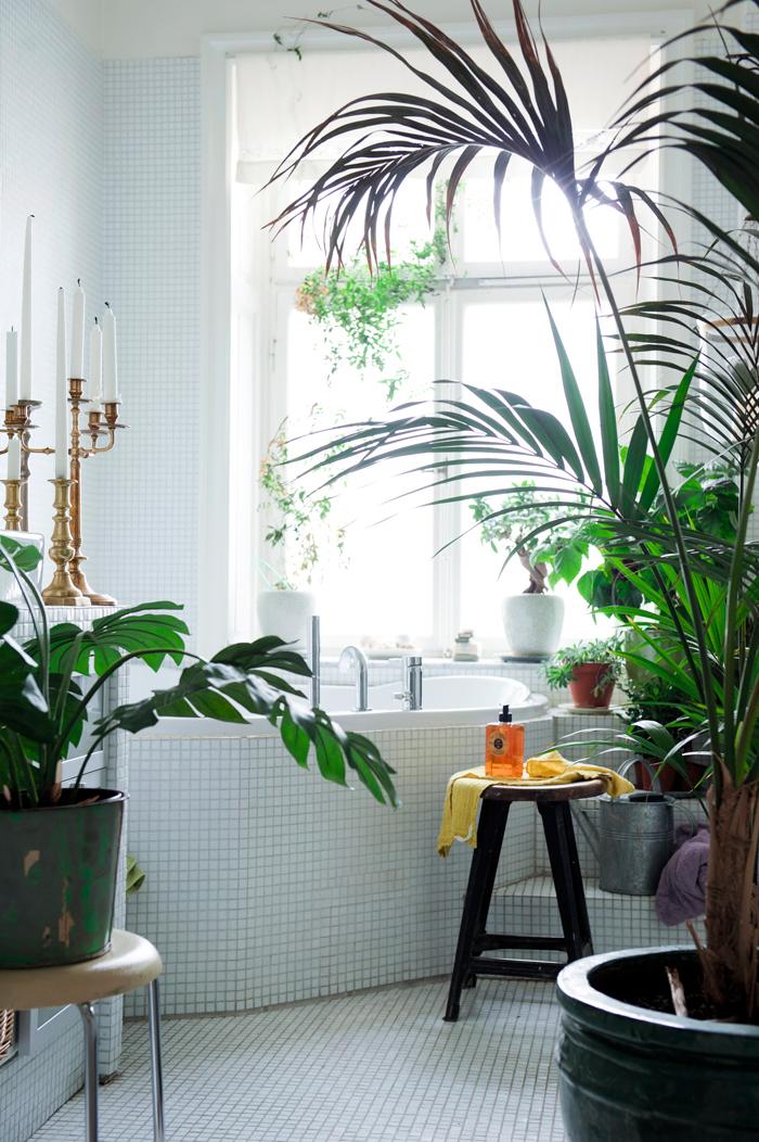 Фото №7 - Как освежить комнатные растения: 6 эффективных советов по уходу