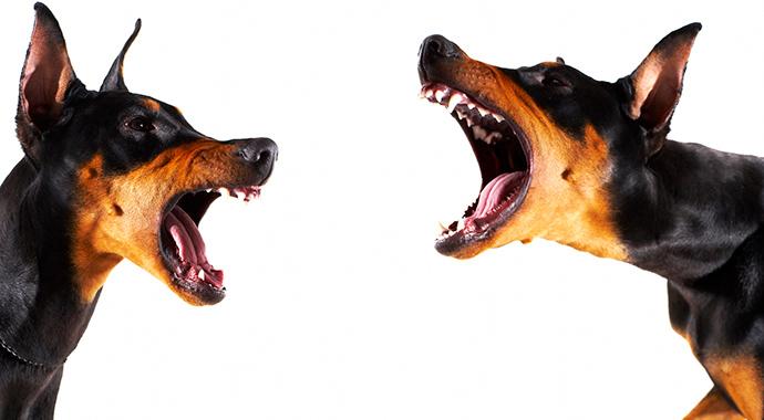 4 правила общения без агрессии
