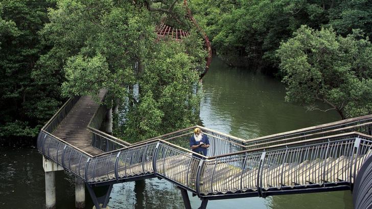 Фото №6 - Сингапур исполняет мечты