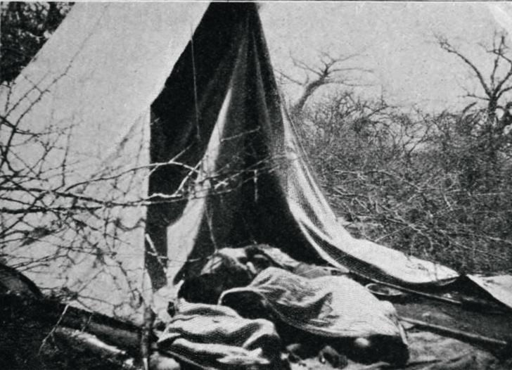 Фото №8 - Кровожадная история самого знаменитого в истории противостояния между человеком и львом