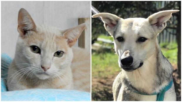 Фото №1 - Котопёс недели: собака Белла и кот Ра