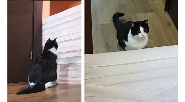 Фото №1 - Кот перепрыгивает стены из туалетной бумаги: новый эксперимент (видео)
