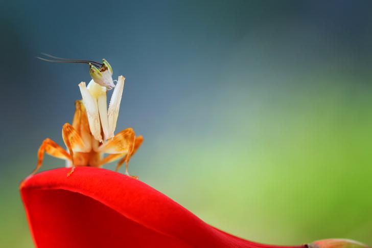 Фото №1 - В Европе вымирают насекомые