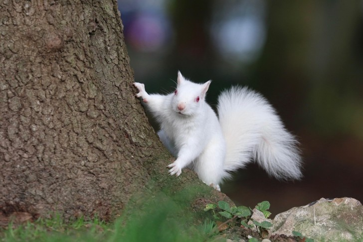 Фото №1 - Белка-альбинос
