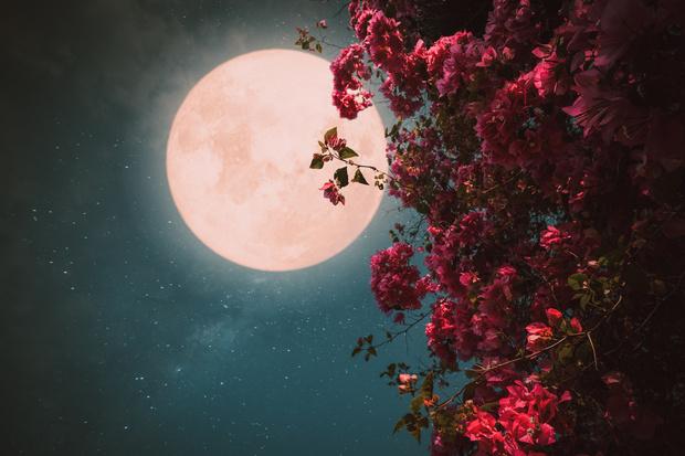 Фото №2 - Розовая луна: что это, когда наступает и как повлияет на все знаки зодиака