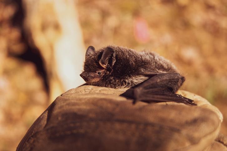 у летучих мышей выявили новый коронавирус