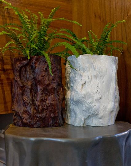 Фото №7 - Модное растение в доме: папоротник