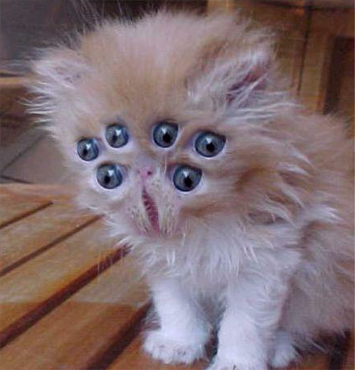 Фото №17 - 20 мемных котов, похожих на известных режиссеров