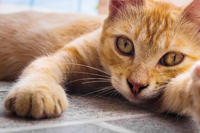 Фото №1 - Кошкины слезки: почему у питомца постоянно мокрые глаза