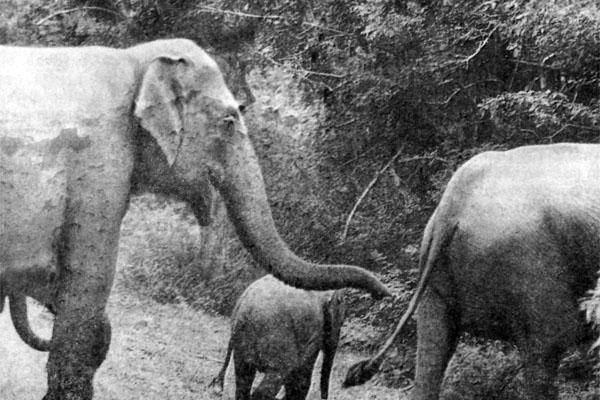 Фото №1 - Уступи слонам дорогу