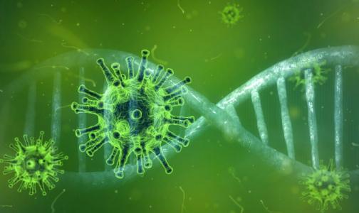 """Фото №1 - Ученые: Благодаря """"родственному вирусу"""" у людей могут появиться антитела к COVID-19"""