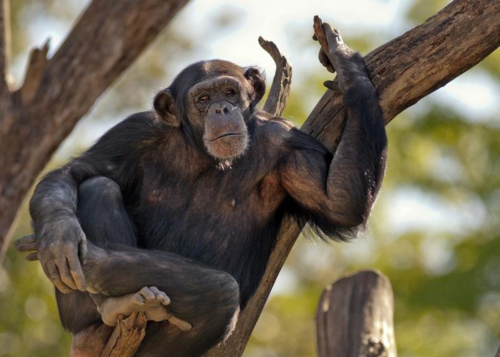 Фото №1 - Руки человека примитивнее, чем лапы шимпанзе