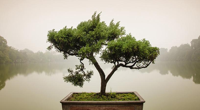 Спокойствие дзен: как его сохранить?