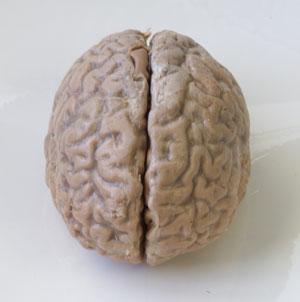 Фото №1 - Подпитка для мозга