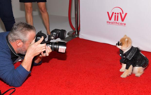 Фото №2 - Найден самый стильный пес в мире