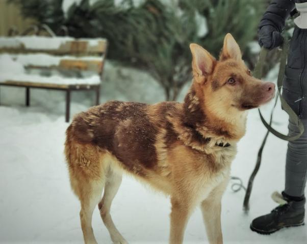 Фото №2 - Котопёс недели: пес Хэппик и кошка Аиша