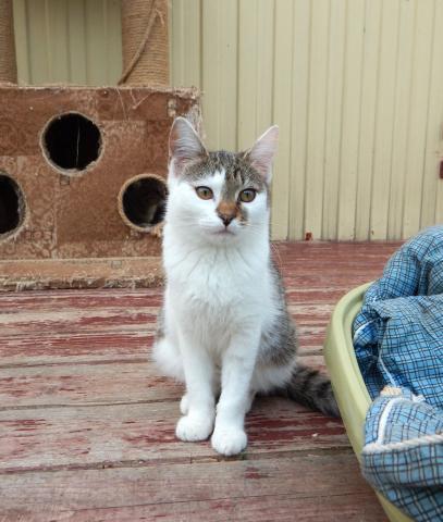 Фото №2 - Котопёс недели: собака Вишня и кошка Вафелька
