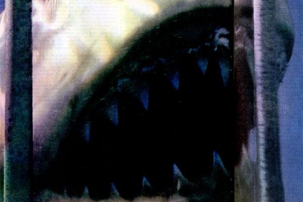 Фото №1 - Чужой среди акул