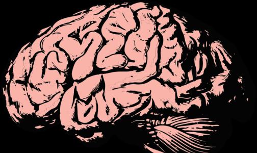 Фото №1 - Ученые назвали профессию, из-за которой уменьшается мозг