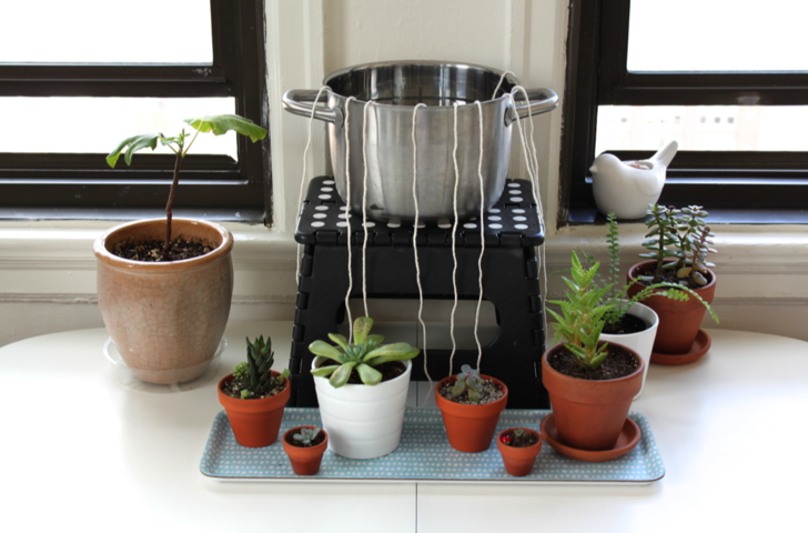 Фото №2 - 8 спасительных лайфхаков для комнатных растений