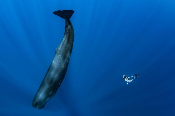 Фото №3 - Гиганты планеты: самые большие животные, которые сейчас живут на свете