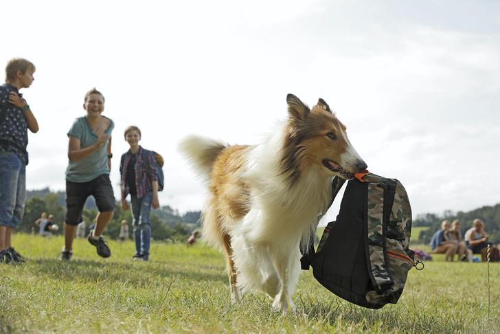 Фото №2 - Лесси: 6 фактов о самой известной собаке в кино